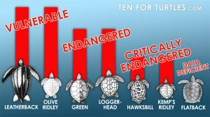 endangered-turtles